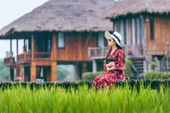 Young woman sitting on wooden path with green rice field in Vang Vieng, Laos Stock Image