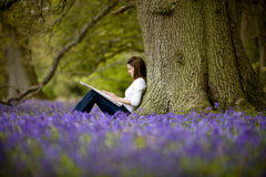 A young woman with sketchbook sitting against a tree trunk in a field of bluebells Stock Images