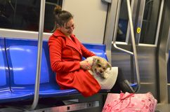 Young woman with small dog. Bucharest, Romania - December 03, 2015: A young lady in red coat sitting in subway train laughs and plays with her cute dog stock images