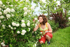 Young woman smelling hortensia Royalty Free Stock Photo