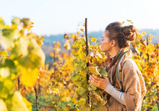 Young woman smelling leafs in autumn vineyard Royalty Free Stock Photography