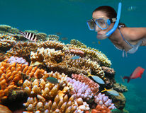 Young woman snorkeling in the Great Barrier Reef Queensland Aus. Woman snorkeling dive in the Great Barrier Reef in the tropical north of Queensland, Australia stock photo