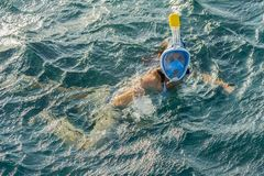 Young woman snorkeling in transparent shallow. Young woman at snorkeling in the tropical water. active woman free diving. Snorkeling in beautiful blue ocean on stock photography