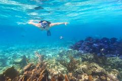Young woman snorkeling in the tropical water. Of Mexico Stock Photo