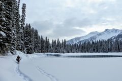 A young woman snowshoeing around Island Lake in Fernie, British Columbia, Canada. The majestic winter background is gorgeous. A young woman snowshoeing around stock photography