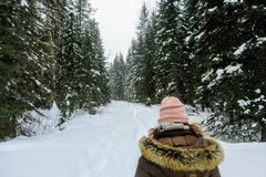 A young woman snowshoeing through the forests of Fernie Mountain Provincial Park, British Columbia, Canada. Walking in her snowshoes through freshly fallen stock image