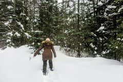 A young woman snowshoeing through the forests of Fernie Mountain Provincial Park, British Columbia, Canada. Walking in her snowshoes through freshly fallen royalty free stock photos