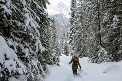 A young woman snowshoeing through forests of Island Lake in Fernie, British Columbia, Canada. A majestic winter background. A young woman snowshoeing through royalty free stock photos