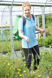 Young Woman Spraying Plants In Polytunnel At Garden Center Royalty Free Stock Photo
