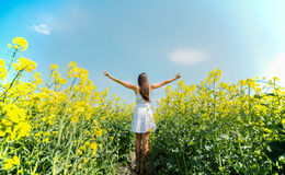 Young woman in the spring field Royalty Free Stock Photo
