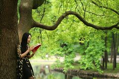 Read a book stand under a blossom tree stock image