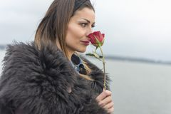 Woman loves red roses stock photos