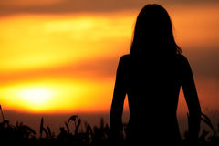 Young woman standing in dry field silhouette Stock Image