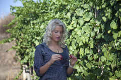 Young woman standing in vineyard and holding sunglasses. Stock Images