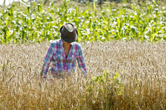 Young woman standing in a wheat field Stock Photo