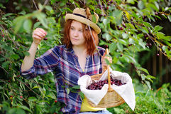 Young woman in straw hat pick berries from cherry tree Stock Photography