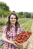 Young woman in strawberry field holding a cardboard box full wit Stock Photo