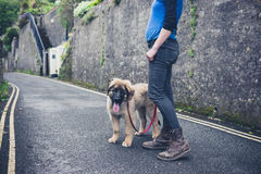 Young woman in street with Leonberger puppy Royalty Free Stock Image