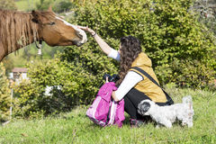 Young woman stroking a beautiful  red wild horse Royalty Free Stock Images