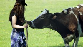 Young woman stroking a cow. Ð¡ontented cow royalty free stock image