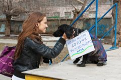 Young woman stroking dog with table translated from the Russian `Our lives are more expensive than a soccer ball` in internation Stock Images