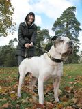 Young woman and strong dog Royalty Free Stock Photography