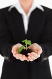 Young woman in suit holding a small plant Stock Photos