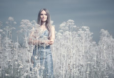 Young woman in a summer field royalty free stock photos