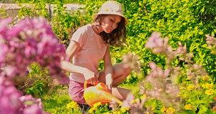 Young woman summer in the garden cares for flowers, plants. The girl on the farm is engaged in planting. Woman plants. Flowers. Person working in the garden stock footage