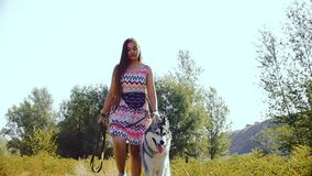 A young woman, on a summer sunny day, walks through the forest with a husky dog. stock video footage