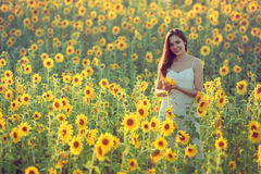 Young woman with sunflowers Stock Photos