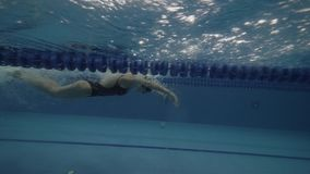 Young woman swimmer floating butterfly stroke in clear water pool underwater. Young woman swimmer floating butterfly style in clear water pool underwater view stock video