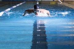 Young woman swimming butterfly stroke. Female swimmer is taking breath while is swimming butterfly stroke in an indoor swimming pool - focus on the head Royalty Free Stock Images