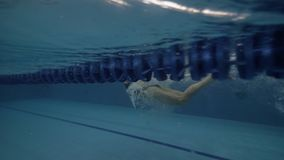 Young woman swimming butterfly style in transparent water pool underwater view. Close up female swimmer floating butterfly stroke on path in blue swimming pool stock video footage