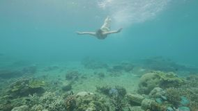 Young woman swimming among tropical fish and coral reef in transparent sea water underwater view. Girl in goggles diving stock video footage