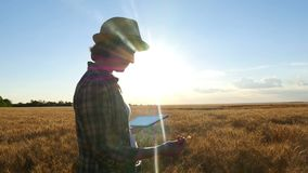 A young woman with a tablet in hand is standing in a wheat field and is studying the wheat harvest during sunset stock footage