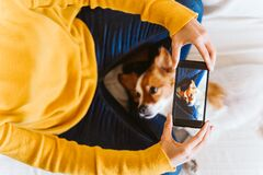 Free Young Woman Taking A Picture Of Cute Small Jack Russell Dog At Home. Stay Home Concept Royalty Free Stock Image - 178363336