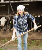 Young woman taking care of cows in cows barn. Young female taking care of cows in cows barn Stock Photos