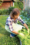 young woman taking care of the garden Stock Photography