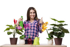The young woman taking care of home plants Stock Image
