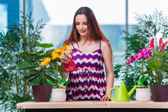 The young woman taking care of home plants Royalty Free Stock Images