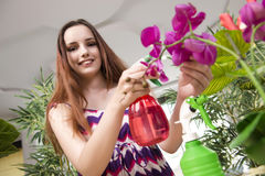 The young woman taking care of home plants Royalty Free Stock Photography