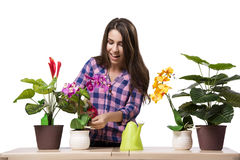 The young woman taking care of home plants Stock Photo
