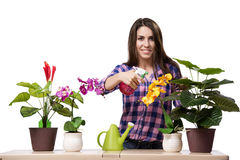 The young woman taking care of home plants Stock Photography