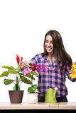 The young woman taking care of home plants Stock Images