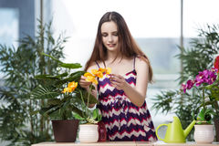 The young woman taking care of home plants Royalty Free Stock Photo