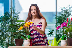 The young woman taking care of home plants Royalty Free Stock Photos
