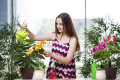 The young woman taking care of home plants Stock Photos