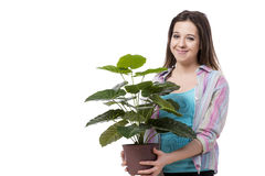 The young woman taking care of plants isolated on white Stock Photos