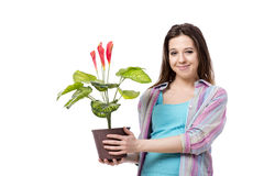 The young woman taking care of plants isolated on white Royalty Free Stock Image